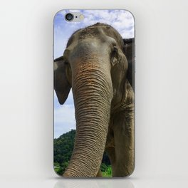 Elephant in Northern Thailand iPhone Skin