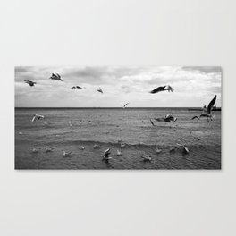 Bird Storm Canvas Print