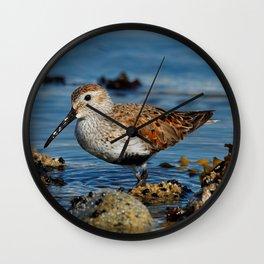 Bird on the Beach / A Solitary Dunlin Wall Clock