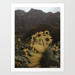 Moody Sunflower Field Art Print