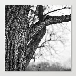 Tree Bark, Yashica C, Kodak TMAX 100 Canvas Print