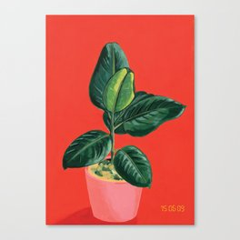 Point & Shoot - Ficus Canvas Print
