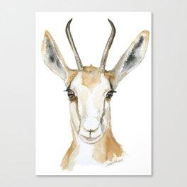 Springbok Antelope Watercolor Painting Canvas Print