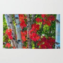 Birch Maple by Teresa Thompson Rug