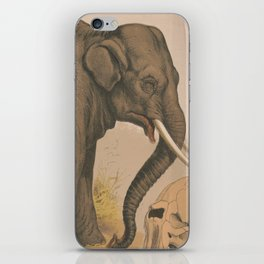 Vintage Elephant Illustration (1874) iPhone Skin