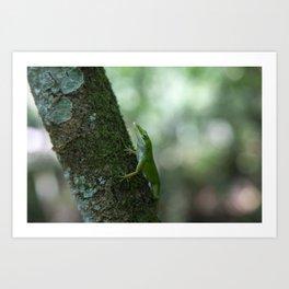Green Anole Art Print
