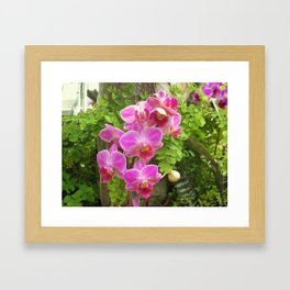 ORCHID SHOWTIME Framed Art Print