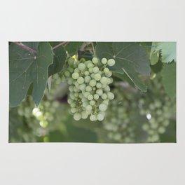 grape grows on vineyard in spring Rug