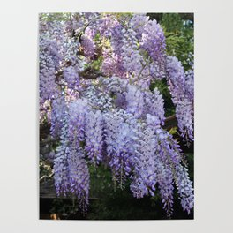 Whimsical Wisteria Poster