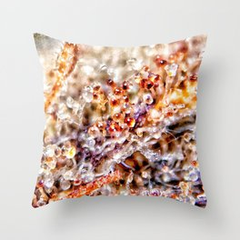 Amber Trichomes Purple Diamond OG Indoor Hydro Dank Buds Close Up View Throw Pillow