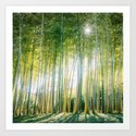 Bamboo Forest Fine Art Print by sidecarphoto