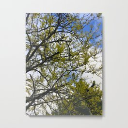 Fine Day Trees Metal Print