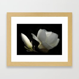 Yulan-Magnolia and bud on black -2- Framed Art Print