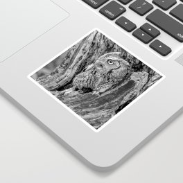 Echo the Screech Owl by Teresa Thompson Sticker