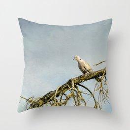Eurasian Collared Dove Throw Pillow
