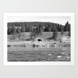 Bison on a Riverbank - Yellowstone National Park - Wyoming Art Print