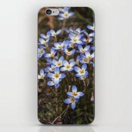 Wild Flowers Bluets iPhone Skin