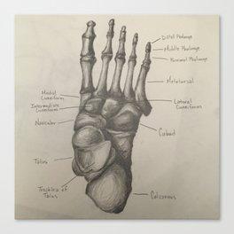 Bones of the Foot Canvas Print