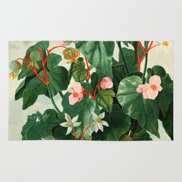 Pink Floral The Oblique-Leaved Begonias : Temple of Flora Rug