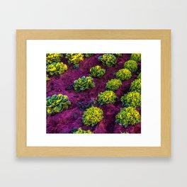 Lettuce Garden of Love Framed Art Print