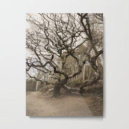 Tree in Culzean Metal Print