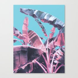 Candy Jungle Canvas Print