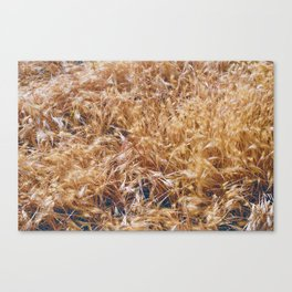 Golden Rays of Sun Canvas Print