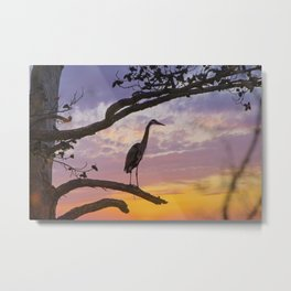 Great Blue Heron in Tree at Sunset Metal Print