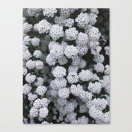 Little White Flowers [Part 2] Canvas Print
