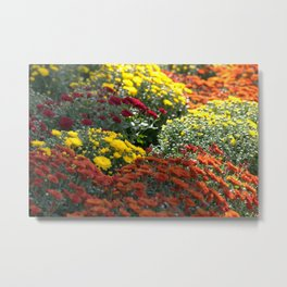Chrysthemum Flowers Variety Metal Print