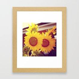 Sunflowers in the sun Framed Art Print