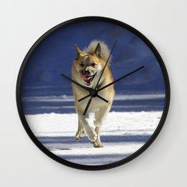 IcelandicSheepdog20150402 Wall Clock