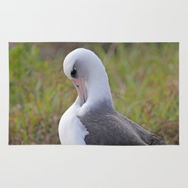 Laysan Albatross Rug