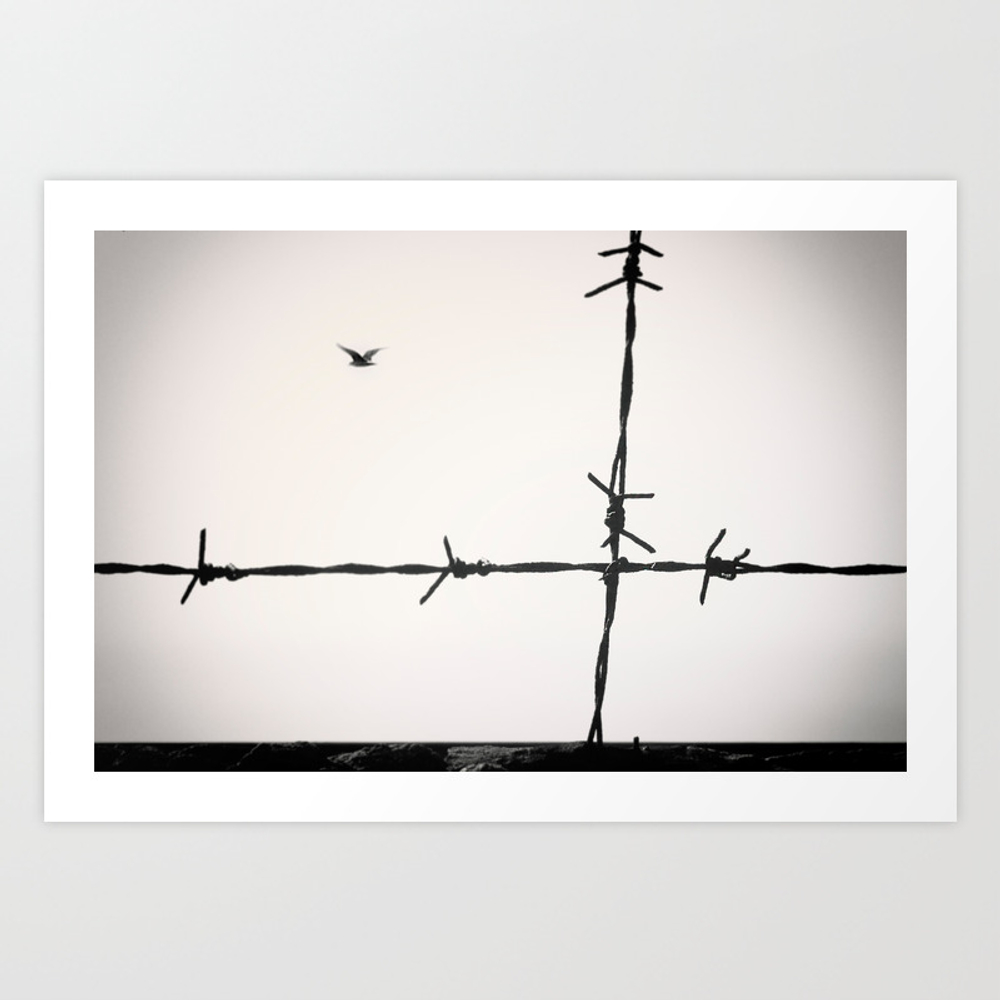 Freedom, A Seagull Is Flying Totally Free Beyond A… Art Print by Josephoto PRN8572781
