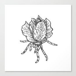 Spider lettuce by Piki Canvas Print