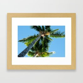 More Palm Trees Photo Print Framed Art Print