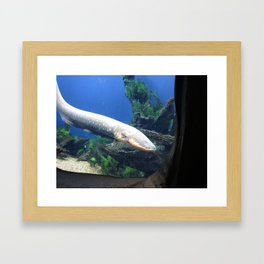 Electric Eel 2 Framed Art Print