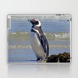 Magellanic Penguin by the Sea Laptop & iPad Skin