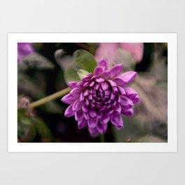 la vie en violet Art Print