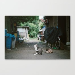 Japanese Alley Cats Canvas Print