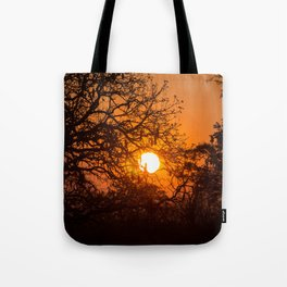 Sultry sun setting behind the sausage tree Tote Bag