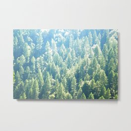California trees Metal Print
