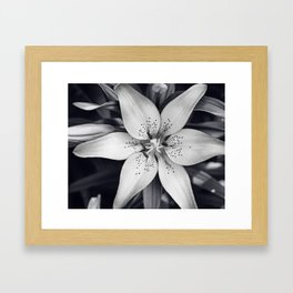 Black and White Lily Flower Photography, Grey Floral Art, Lillies Photo, Grey Lilly Nature Print Framed Art Print