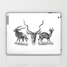 Ernst Haeckel's Antilopinae Laptop & iPad Skin