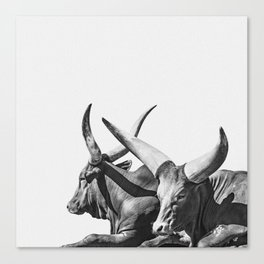 Animal Photography | Ankole-Watusi | Cattle | Bull | Steer | Black and White Canvas Print