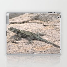 Desert Spiny Lizard, No. 2 Laptop & iPad Skin