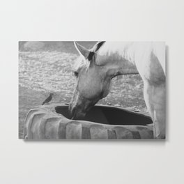 Horse eating with bird Metal Print
