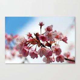 Sakura - Cherry Blossom  Canvas Print