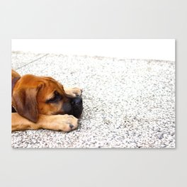 Its a Dog's Life Canvas Print