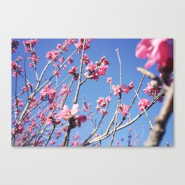 Blue Blossoms 03 Canvas Print